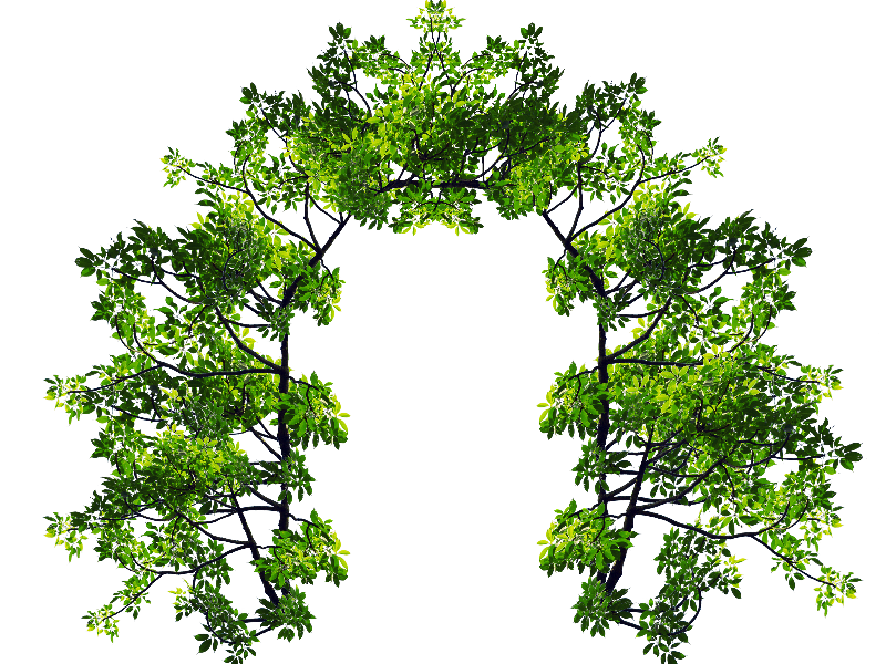 Arch With Green Leaves and Tree Branches PNG Image