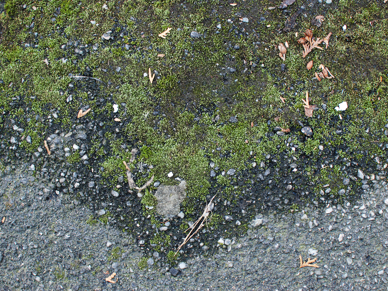 Asphalt With Moss Texture High Res