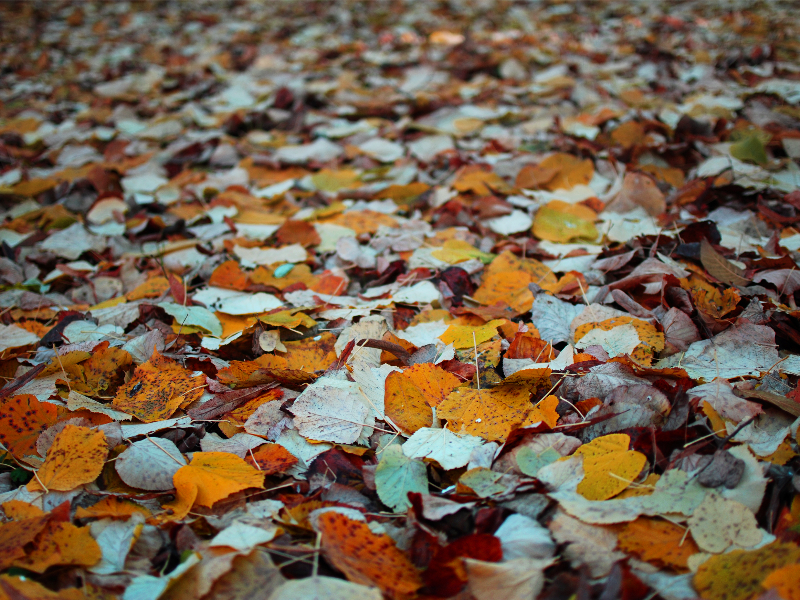 Autumn Leaves Background Image