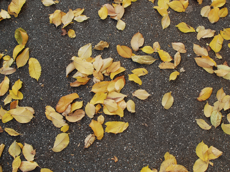 Autumn Leaves On Asphalt Free Texture