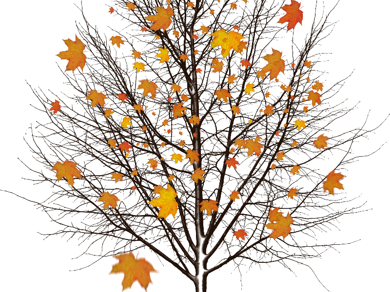 Autumn Tree With Leaves Isolated Object Png