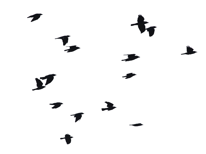 Birds Flying Png Image Isolated Objects Textures For