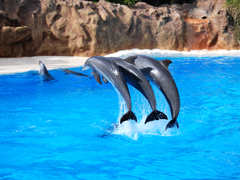 Blue Lagoon With Jumping Dolphins Stock Image