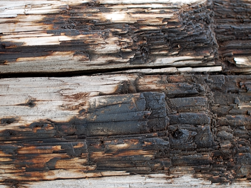Burned Wood Texture High Res