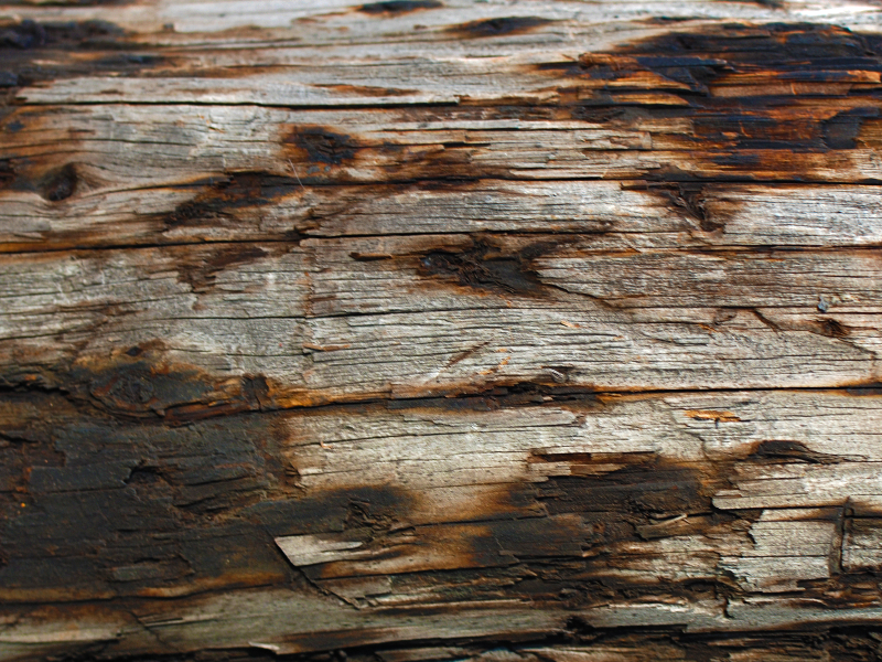 Burnt Wood Texture High Res