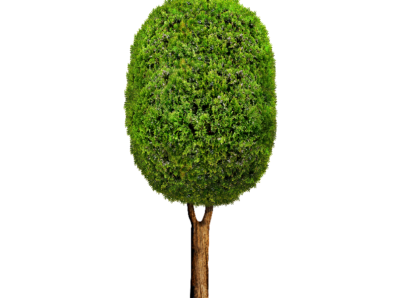 Cartoon Tree PNG Isolated Objects