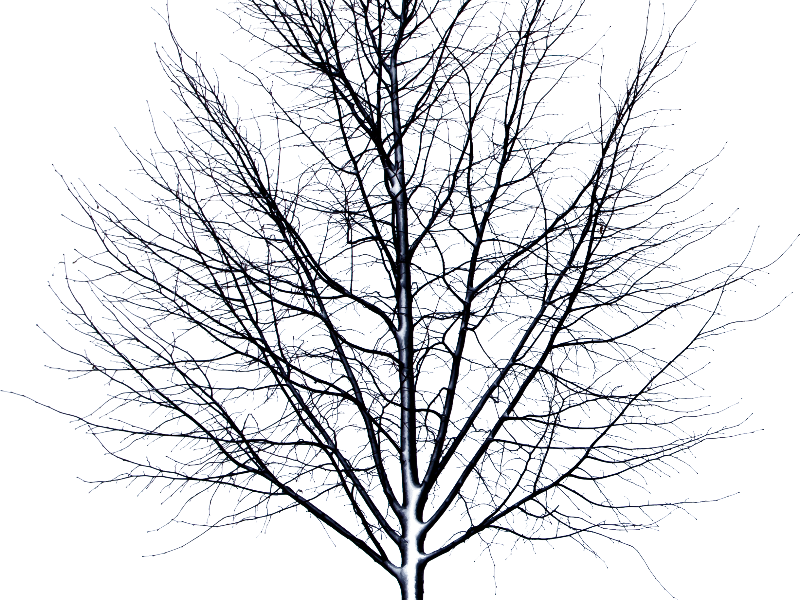 Dead Tree Isolated Object PNG