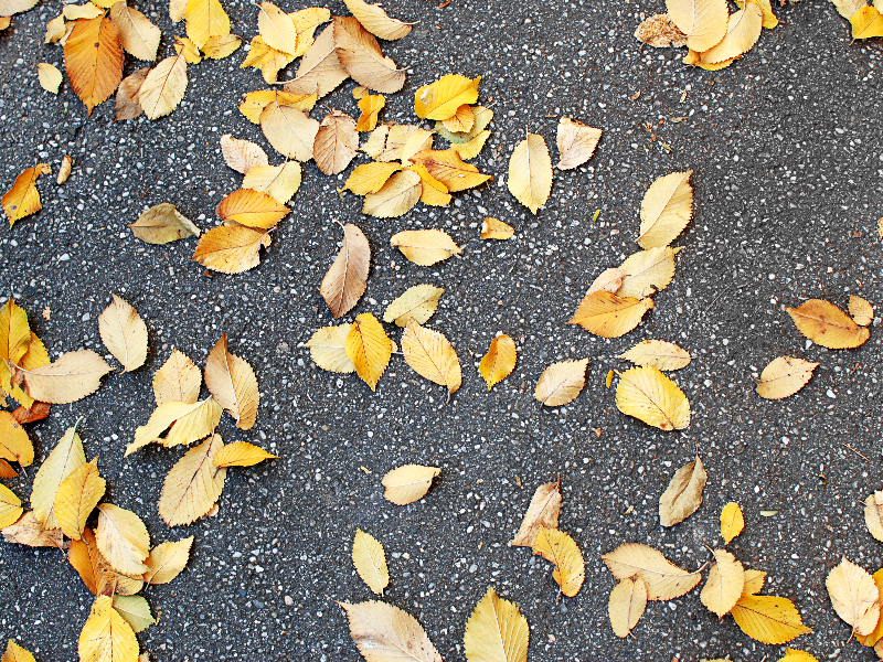 Dry Leaves On Road Texture High Res