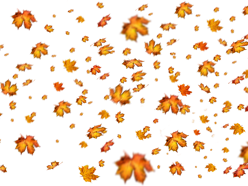 Fall Leaves Png Overlay For Photoshop