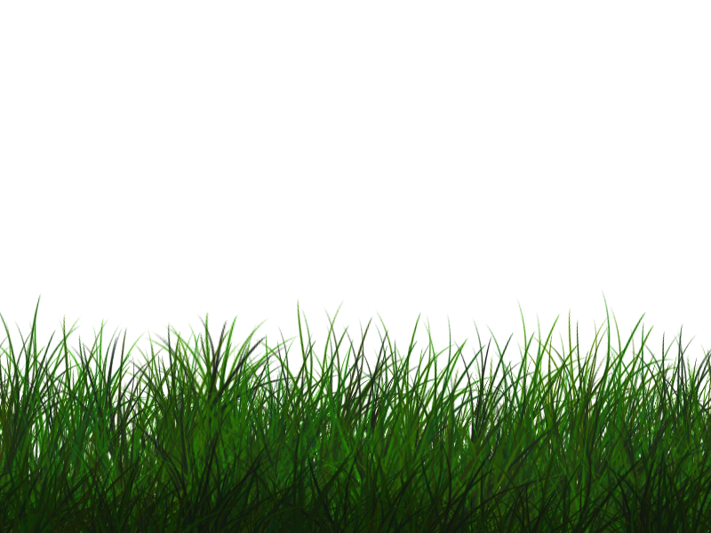 Grass Frame Isolated With Transparent Background Free ...
