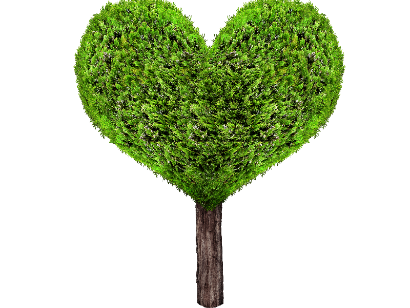 Green Heart Tree PNG (Isolated-Objects) | Textures for Photoshop