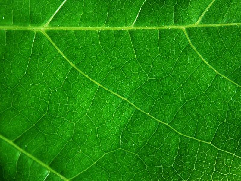 Green Leaf Cell Texture