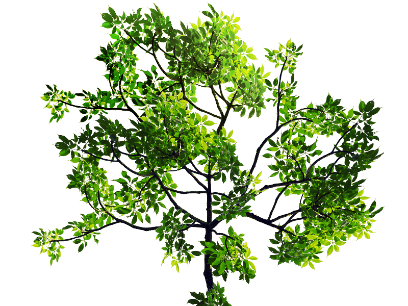 Green Leaves Tree Branch PNG Stock Image