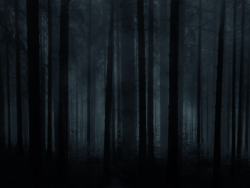 Horror Forest Background For Photoshop