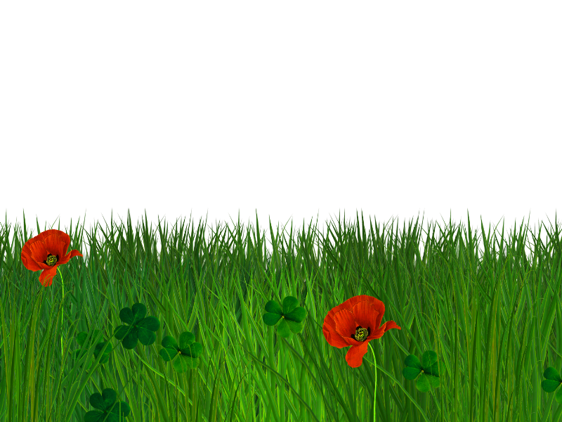 Isolated Grass Border With Poppy Flowers Free Seamless Background