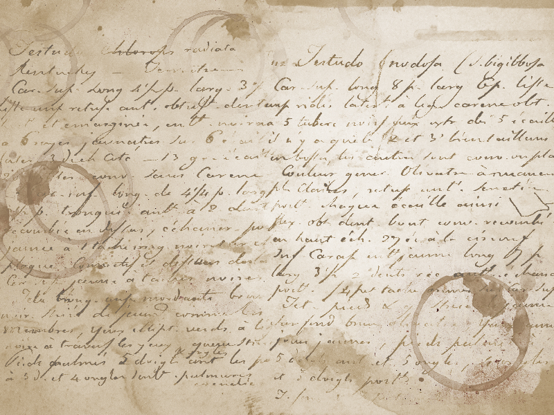 Manuscript Old Writing On Coffee Stained Paper Texture