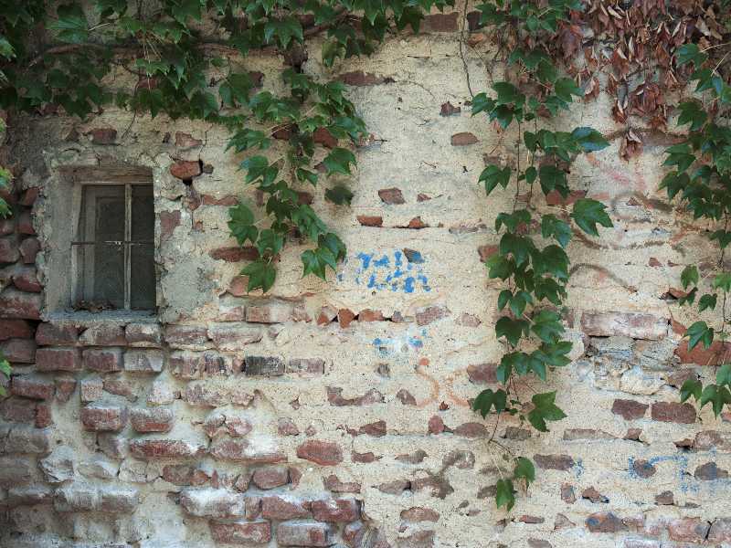 Old Brick House Wall With Foliage