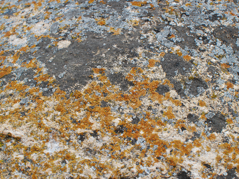 Old Stone With Red Lichen Texture