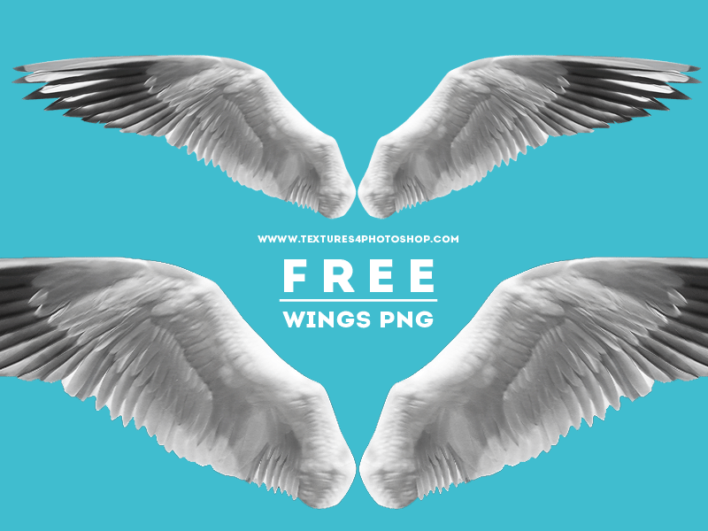Open Wings PNG Free Image