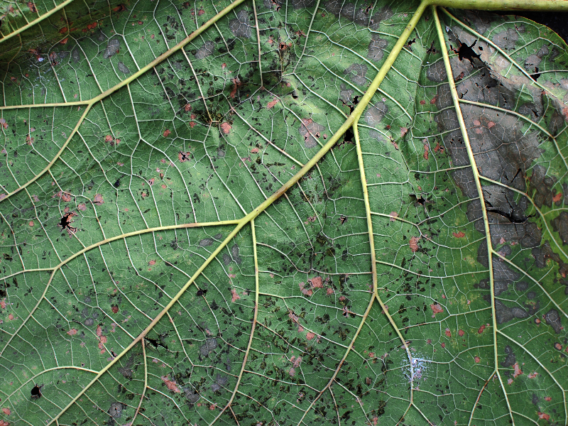 Plant Leaf Disease Texture High Res