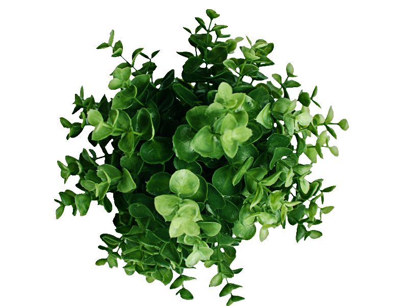 Plant Top View PNG Image