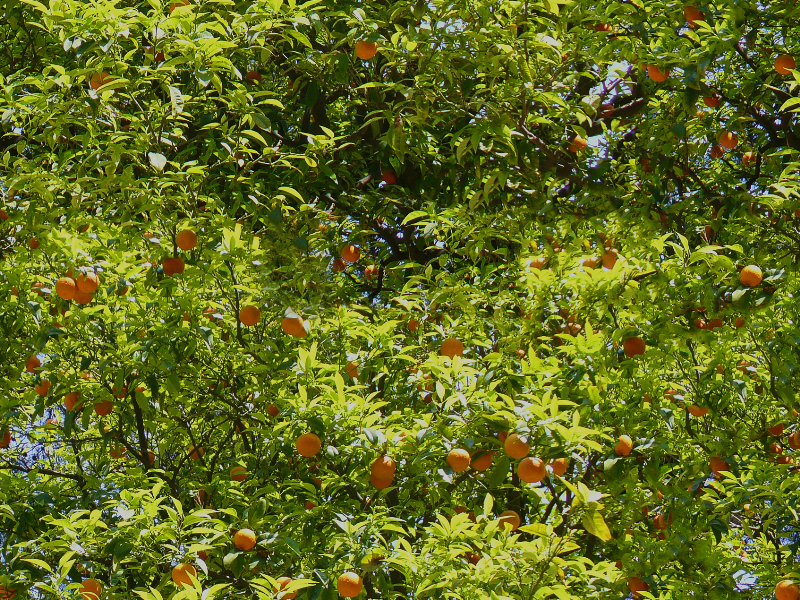 Seamless Orange Tree Background Texture
