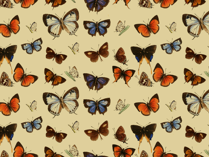 Seamless Vintage Butterfly Pattern DecorAndOrnaments Textures Awesome Butterfly Pattern
