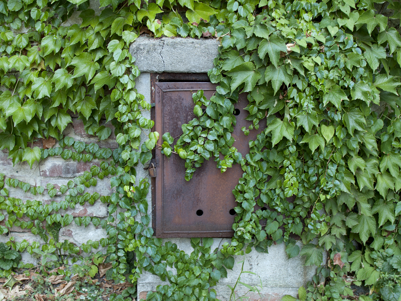 Secret Garden Door With Ivy Leaves