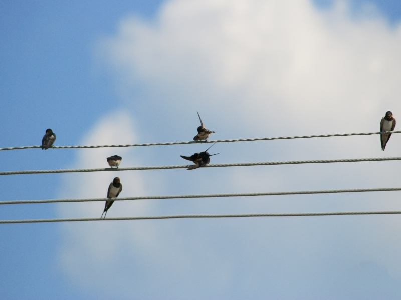 Sky Background With Birds Sitting On Wire
