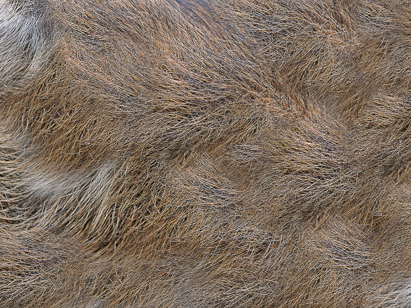 Spines Fur Texture Free