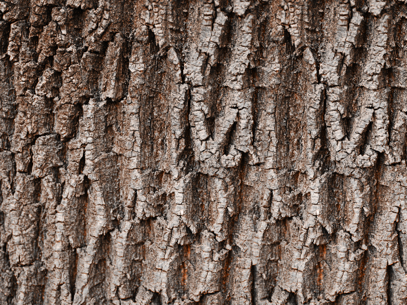 Tree Bark Texture For Photoshop