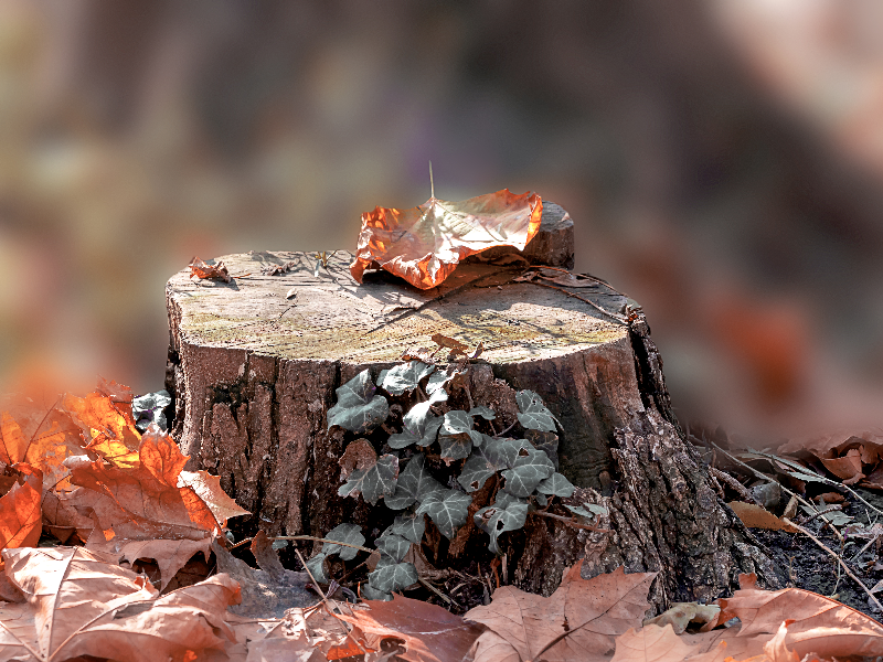 Tree Stump Woods Background