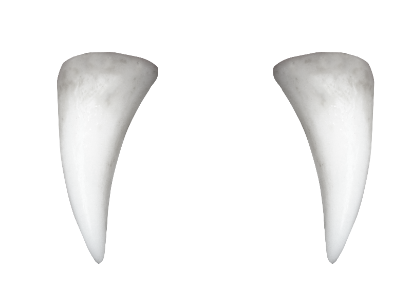 Vampire Teeth with Pointed Tooth PNG