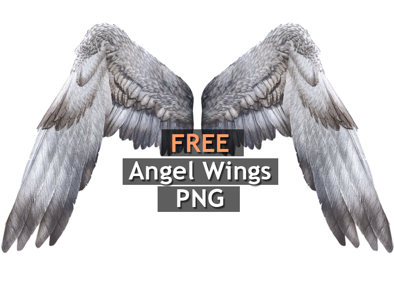 White Angel Wings PNG Free